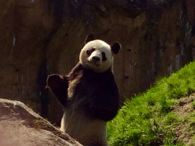 Zoo de Beauval Destination Libre